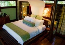 Forest view Bungalow