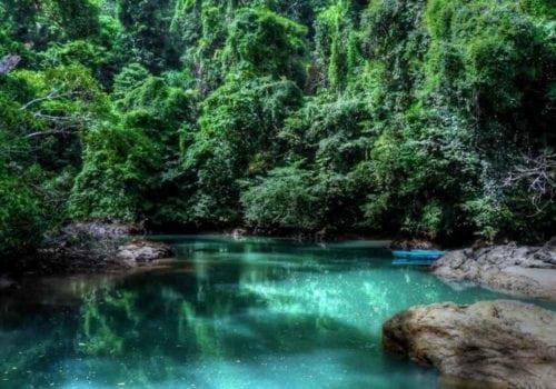 Costa RIcan Jungles
