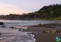 Matapalo Costa Rica