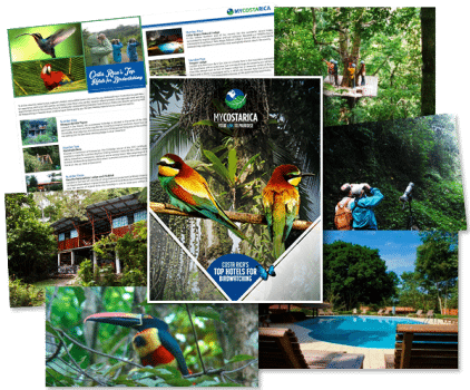 Birding Collage