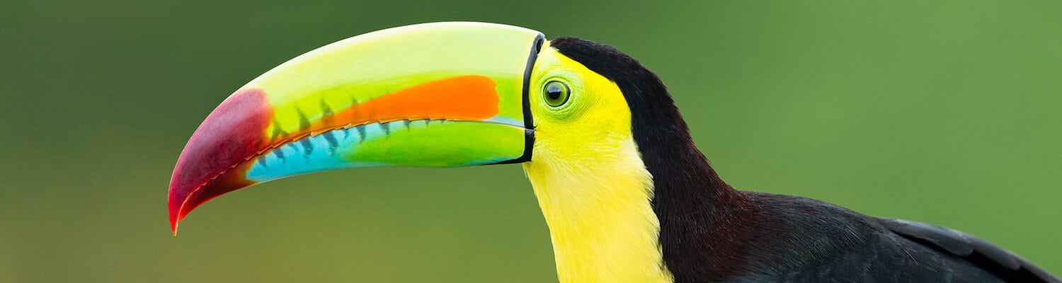 Costa Rica Travel Guide Tips toucan