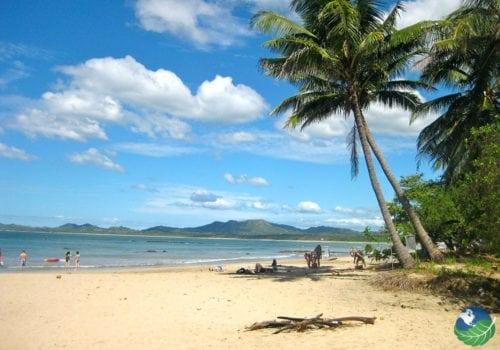 Tamarindo Beach Palm Trees
